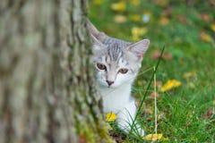 Kot w drewnach drzewem fotografia stock