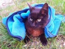 Kot w dzieciach odziewa Fotografia Royalty Free