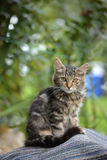 Kot w jardzie Zdjęcie Royalty Free