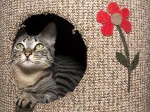 Kot w jego domowy przyglądający up Fotografia Stock
