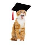 Kot w kapeluszowym kawalerze obraz royalty free