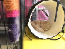 Kot w klatce zdjęcie royalty free