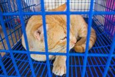 Kot w klatka wizerunku Obrazy Royalty Free