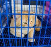 Kot w klatka wizerunku Obraz Royalty Free