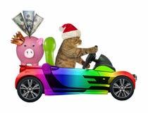 Kot w koloru samochodzie z prosiątko bankiem zdjęcia royalty free