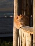 Kot w kopyto_szewski dnia słońce Fotografia Stock