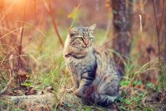 Kot w lesie Obraz Royalty Free