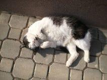 Kot w mieście Obrazy Royalty Free
