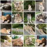 Kot w mieście Zdjęcia Royalty Free