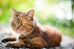 Kot w naturze Obraz Stock