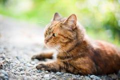 Kot w naturze Zdjęcia Royalty Free