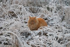 Kot w śniegu Obraz Royalty Free