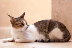 Kot w Nizwa, Oman Obraz Stock