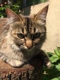 Kot w odpoczywać Zdjęcie Royalty Free