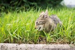 Kot w ogródzie Sistani obraz royalty free