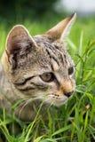 Kot w ogródzie Sistani zdjęcia stock