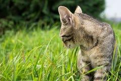 Kot w ogródzie Sistani zdjęcie royalty free