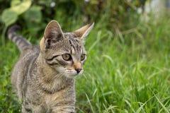 Kot w ogródzie Sistani obrazy royalty free