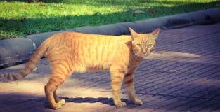 Kot w ogródzie obrazy royalty free