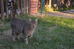 Kot w ogródzie zdjęcie stock