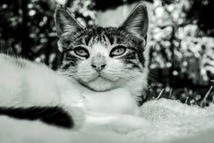 Kot w ogródzie w czarny i biały zdjęcie royalty free