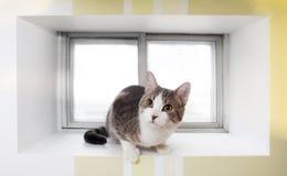 Kot w okno Zdjęcia Stock