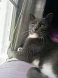 Kot w okno Obrazy Stock