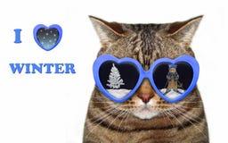 Kot w okularach przeciwsłonecznych z zimy odbiciem 2 zdjęcia royalty free