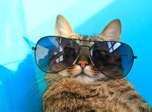 Kot w okularach przeciwsłonecznych Zdjęcia Stock
