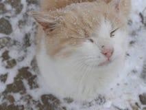 Kot w płatkach śniegu zdjęcia royalty free