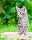 Kot w parku obraz royalty free