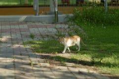 Kot w parku Zdjęcie Royalty Free
