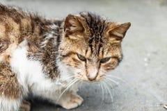 Kot w parku Zdjęcia Royalty Free
