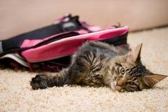 Kot w plecaku Obrazy Royalty Free