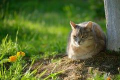 Kot w plenerowym Zdjęcia Royalty Free