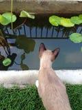 Kot w pobliżu basen i spojrzenie puszek Obrazy Royalty Free