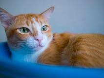 Kot w pucharze Zdjęcie Royalty Free