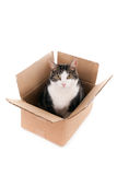 Kot w pudełku, przyglądający up obraz stock