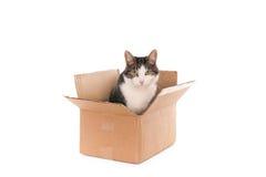 Kot w pudełku Zdjęcie Stock
