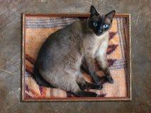 Kot w ramie Fotografia Royalty Free