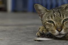 Kot w relaksującym czasie Obraz Royalty Free