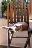 Kot w słońcu obrazy stock