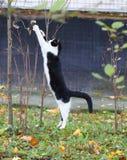 Kot w skoku fotografia stock