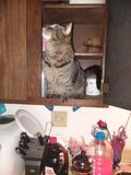 Kot w spiżarni obraz stock