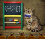 Kot w szkłach uczy matematykę 2 zdjęcia stock