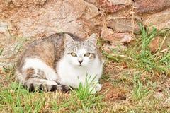 Kot w Trawie Obrazy Royalty Free