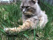 Kot w trawie Fotografia Royalty Free