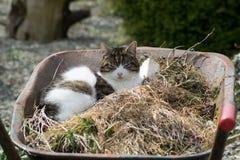 Kot w wheelbarrow zdjęcie royalty free
