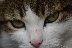 Kot w wheelbarrow obraz stock