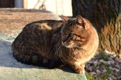Kot w świetle Fotografia Stock